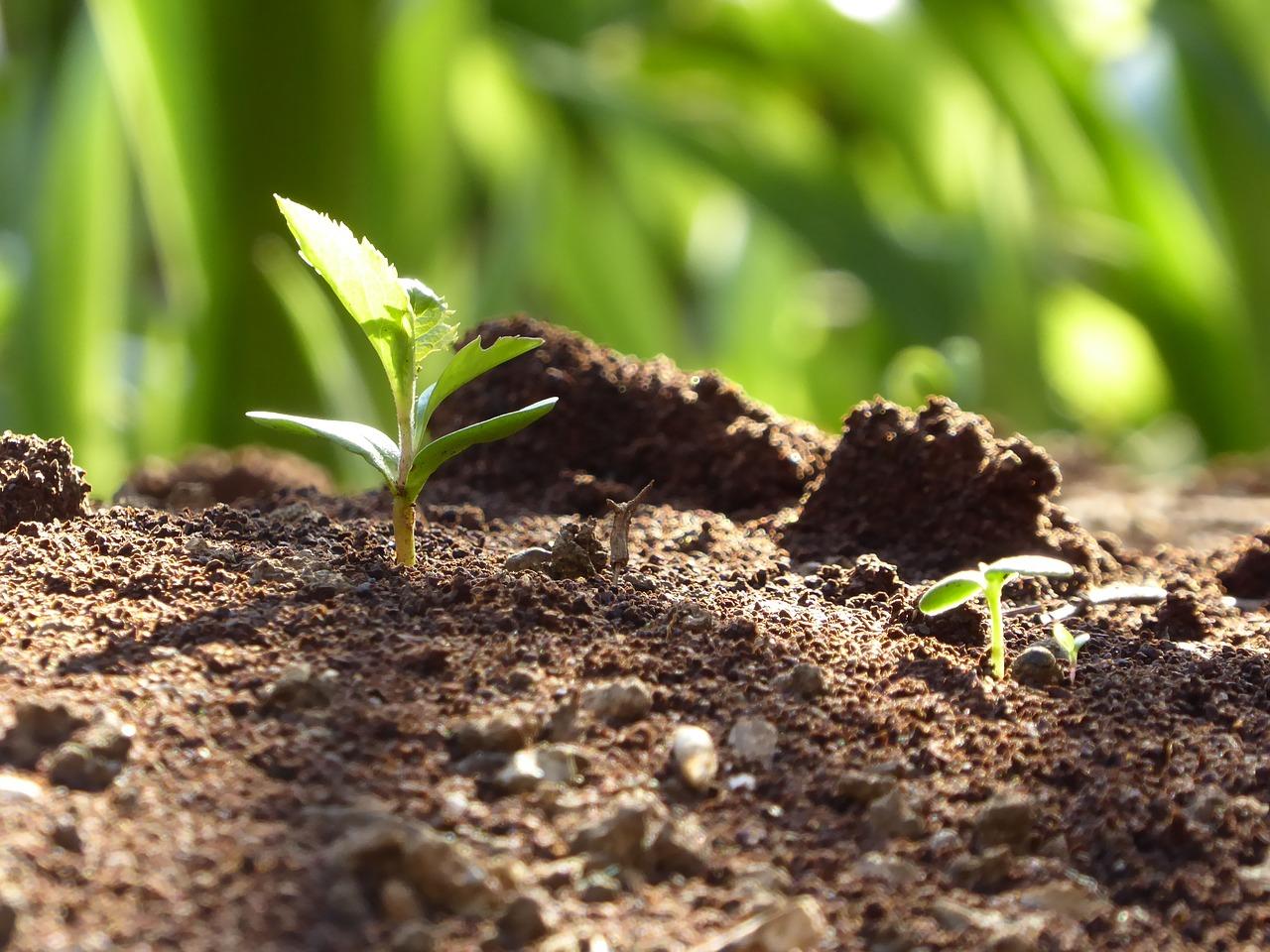 bando riforestazione 2021