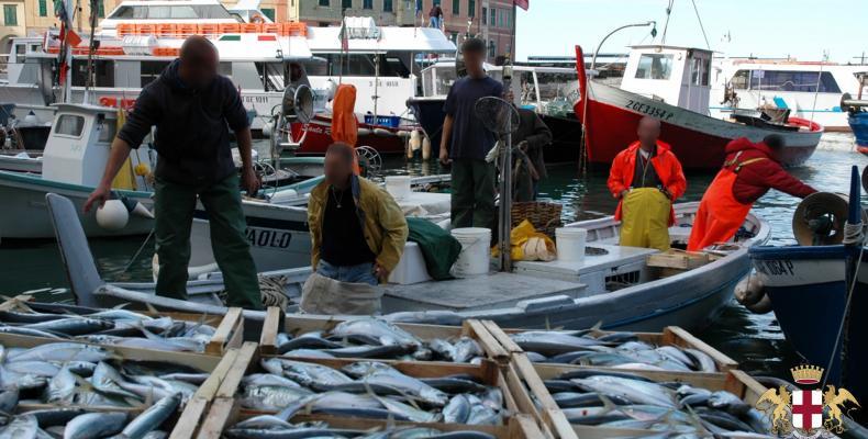 Camogli, pescatori e pesci