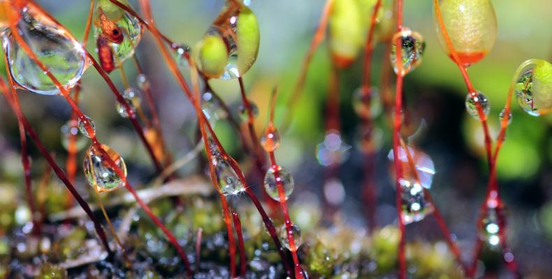 pioggia e giardino