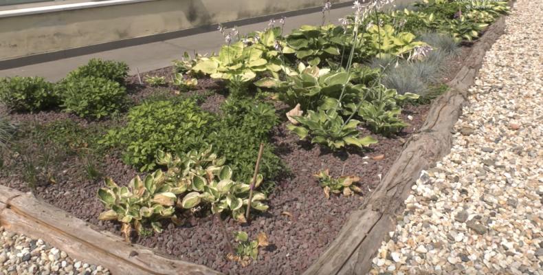 Particolare del Rain Garden di Campomorone