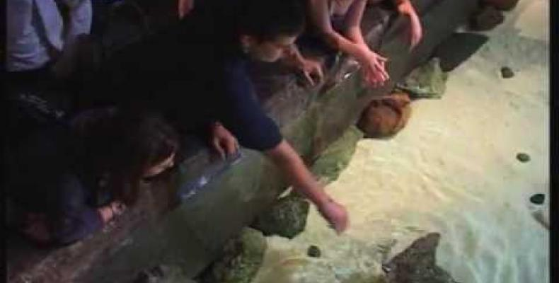 Allestimento all'Acquario di una nuova postazione video dedicata agli interventi di salvataggio e rilascio di specie marin
