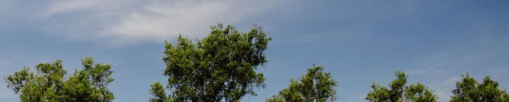 Immagine rappresentativa per Ambiente