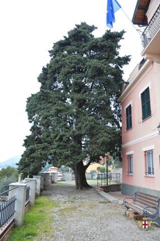 Pieve Ligure: Vista Municipio