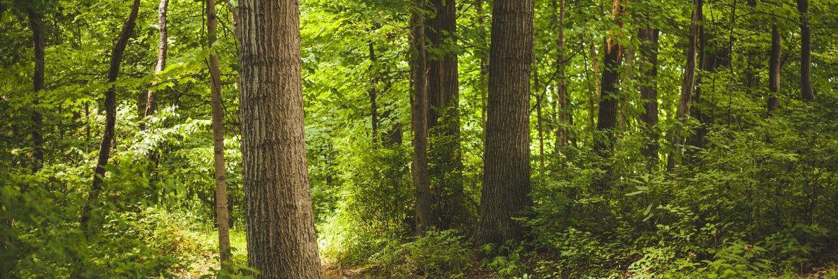 News: Aste Pubbliche per la vendita di terreni boschivi e reliquati stradali nei comuni di Santo Stefano d'Aveto, Lumarzo e Ne.